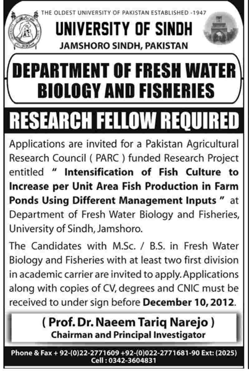 University of Sindh Jamshoro Requires Research Fellow